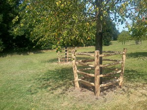 chestnut tree guards, tree protection